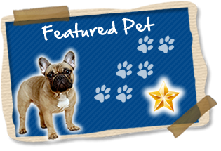 featured_pet