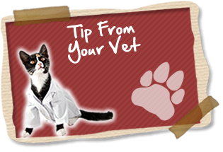 tip_from_your_vet
